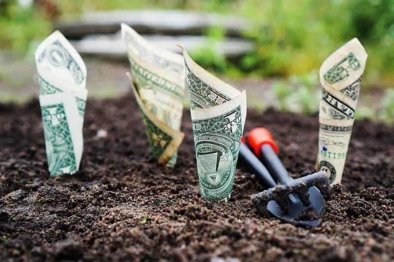 Beet-aus-dem-Geldscheine-wachsen